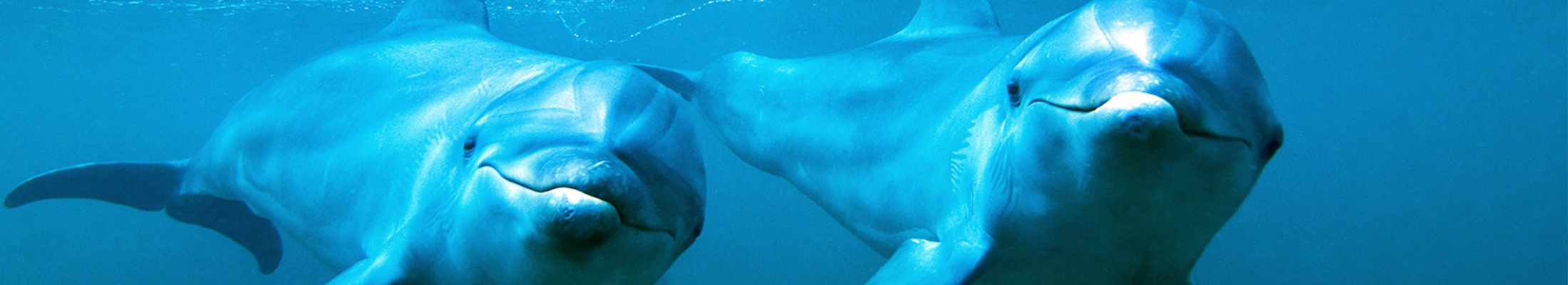 Zanzibar Dolphins